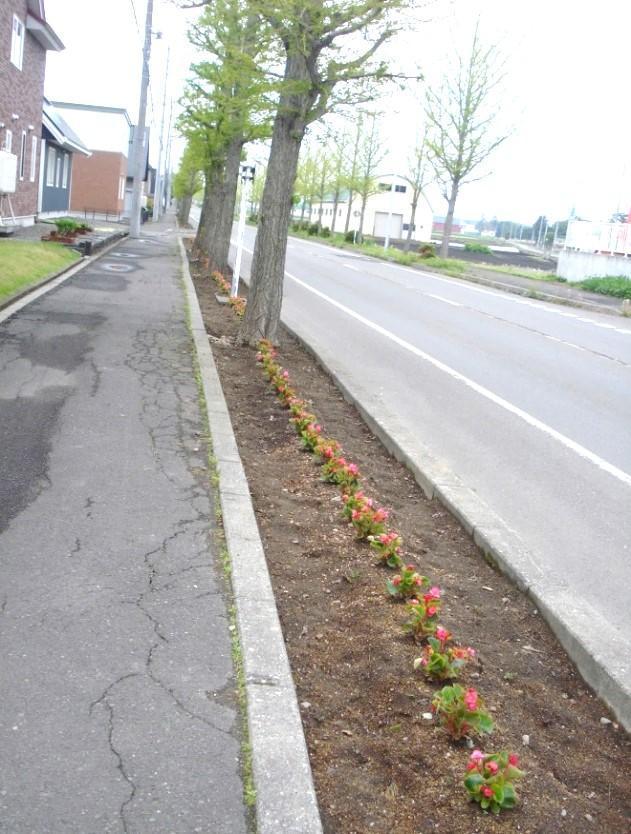 春の花植え