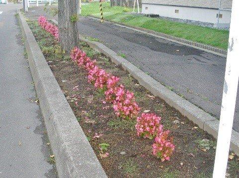 植樹枡花壇除草作業