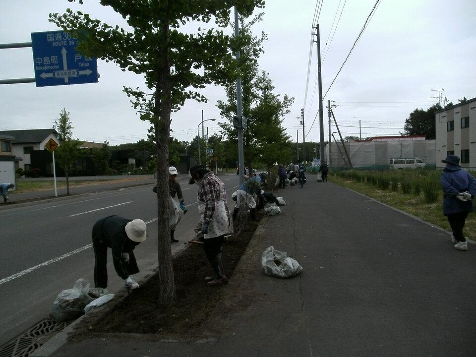 団地中央通りの植樹桝の除草する